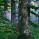 宜昌五峰入选第四批全国森林康养试点