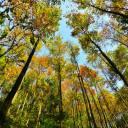 宜昌西塞国森林公园自驾游门票预订,自驾车到西塞国避暑休闲一日游