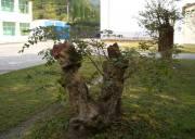 圈椅淌湿地公园--西塞国核心地带,罕见的高山湿地景观,宜昌避暑旅游西塞国