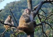 神农架旅游景点太和山景区猕猴乐园