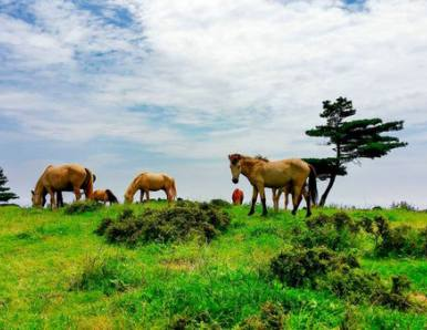 宜昌百里荒景区承办宜昌首届农民丰收节和牛羊美食节