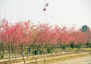 三峡富裕山百里荒草原上榜2019年湖北省休闲农业示范点名单