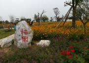 宜昌到枝江同心花海赏花、金湖湿地观湿地、弥陀寺拜佛一日游