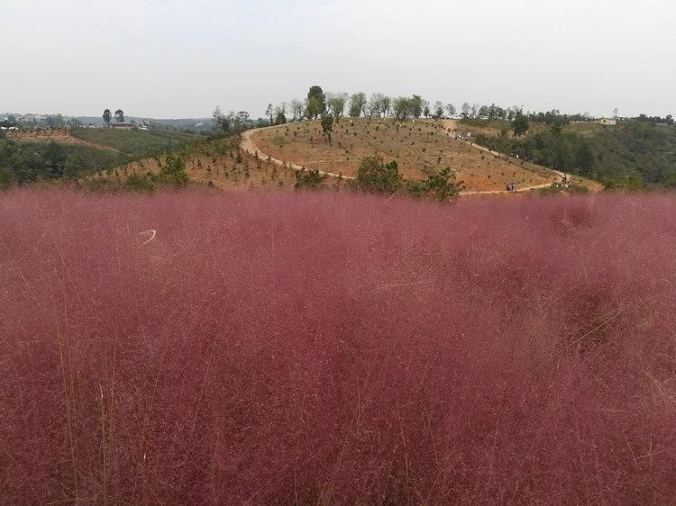 知音畔岛3网红草