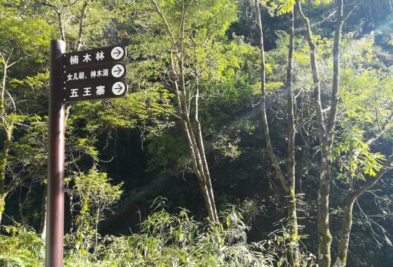 宜昌中亚楠木林风景区(夷陵区雾渡河交战垭)