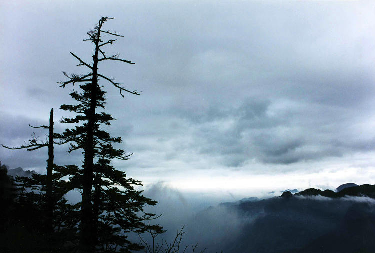 神农架原始森林云海奇观