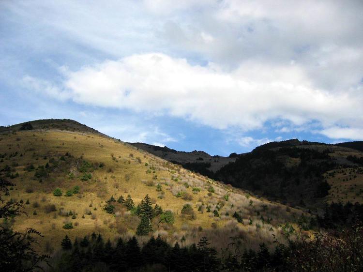 神农顶15高山草甸