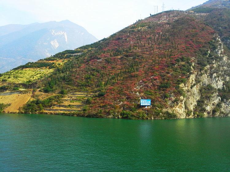 现在就去看三峡红叶,三峡红叶进入最佳观赏期 宜昌到长江三峡红叶旅旅游