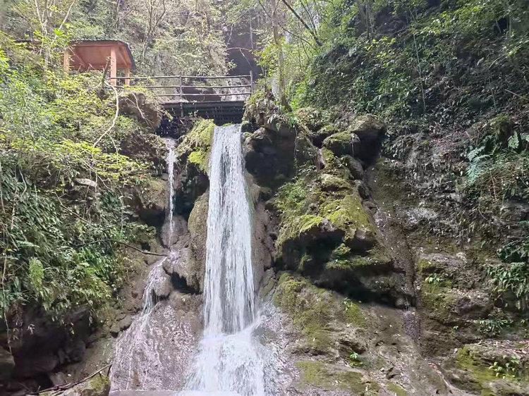 宜昌夷陵区中亚楠木林大峡谷风景区,野生楠木观赏公园、高端修心养生度假目的地